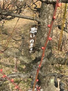 思いのままの梅の木