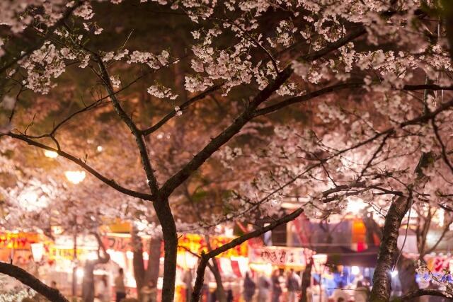 夜桜と屋台