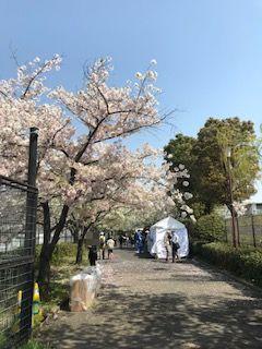 柴島浄水場の桜並木の通り抜け入口