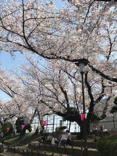 柴島浄水場の桜並木の通り抜けの花見の様子