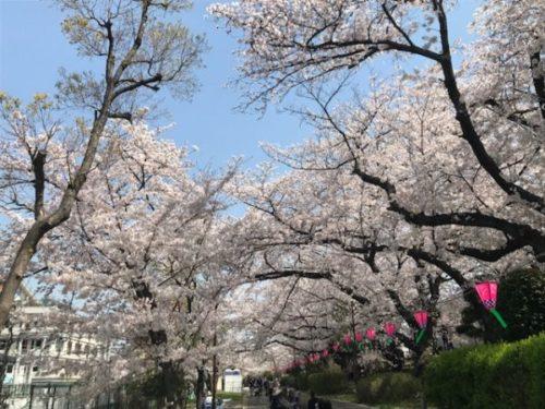 柴島浄水場のお花見会場