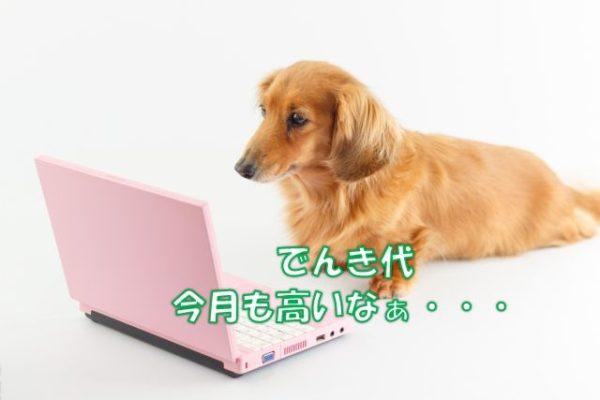 パソコンを見つめながら電気代に悩む犬